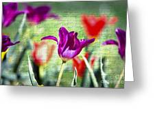 Spring Sensations  Greeting Card