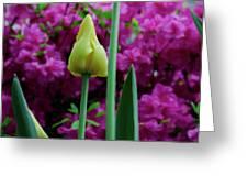 Spring Series #05 Greeting Card