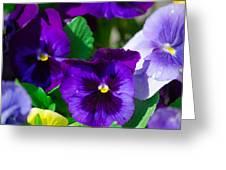 Spring Series #15 Greeting Card