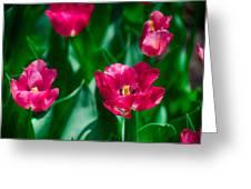 Spring Series #28 Greeting Card