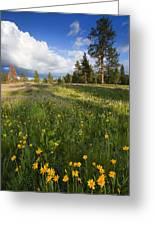 Spring Shadows Greeting Card by Mike  Dawson