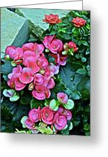 Spring Show 17 Begonias And Roses Greeting Card