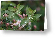Spring Showers 5 Greeting Card