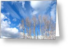 Spring Sky And Cotton Trees Greeting Card