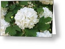 Spring Snowball Greeting Card