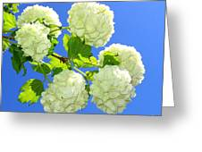 Spring Snowballs Greeting Card