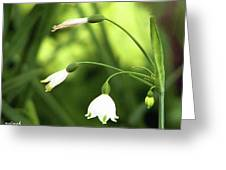 Spring Snowdrops Greeting Card