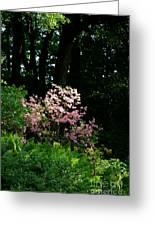 Spring Spotlight Greeting Card