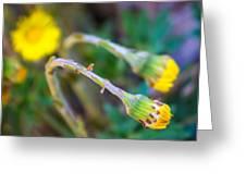 Spring Springing Greeting Card