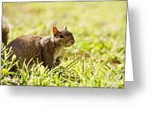 Spring Squirrel Greeting Card