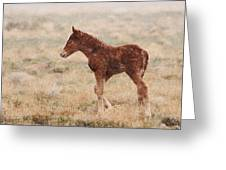 Spring Storm Foal Greeting Card