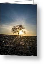 Spring Sun Set Greeting Card