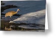 Spring Sunset With Sandhill Crane Greeting Card