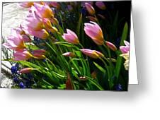 Spring Tenderness Greeting Card