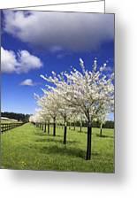 Spring Time #5 Greeting Card