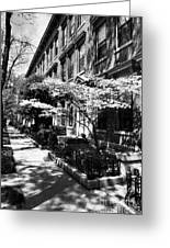 Spring Time In Covington Kentucky Bw Greeting Card