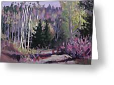 Spring Trail Greeting Card