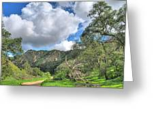 Spring Trail In The Canyon Greeting Card