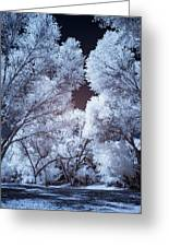 Spring Trees And Shadows Greeting Card
