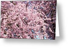 Spring Trees Art Prints Pink Springtime Blossoms Baslee Troutman Greeting Card