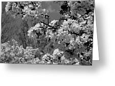 Spring Trees - B And W Greeting Card