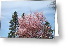 Spring Trees Bossoming Landscape Art Prints Pink Blossoms Clouds Sky  Greeting Card
