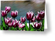 Spring Tulips 1 Greeting Card