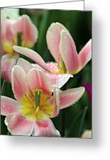 Spring Tulips 152 Greeting Card