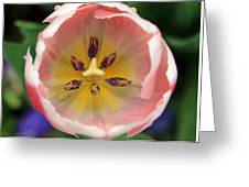 Spring Tulips 174 Greeting Card