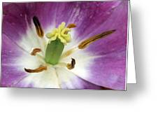 Spring Tulips 199 Greeting Card