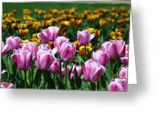 Spring Tulips 2 Greeting Card