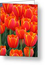 Spring Tulips 206 Greeting Card
