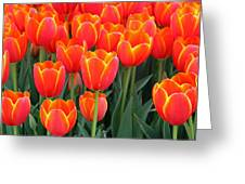 Spring Tulips 207 Greeting Card