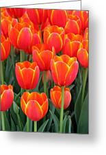Spring Tulips 210 Greeting Card