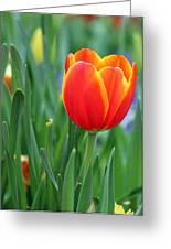 Spring Tulips 214 Greeting Card