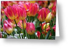 Spring Tulips In The Rain Greeting Card by Rona Black