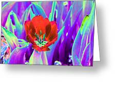 Spring Tulips - Photopower 3146 Greeting Card