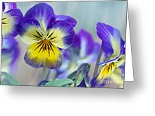 Spring Violas Greeting Card