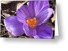 Spring Violet Greeting Card
