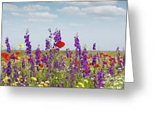 Spring Wild Flowers Meadow Greeting Card
