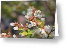 Spring Wildflower Greeting Card
