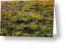 Spring Wildflowers Greeting Card