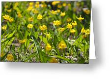 Spring Wildflowers Greeting Card