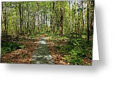 Spring Woods Greeting Card