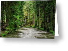 Spring Woods Greenery Greeting Card