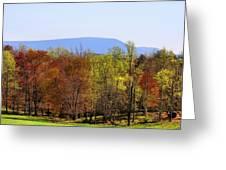 Spring Woods Greeting Card