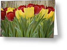 Spring Yellow And Red Tulips Greeting Card