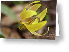 Spring Yellow Flower Greeting Card