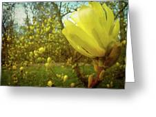 Spring. Yellow Magnolia Flower Greeting Card