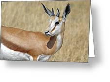 Springbok Portrait Greeting Card